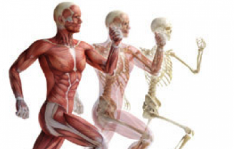 The Importance of Structural and Muscle Balance