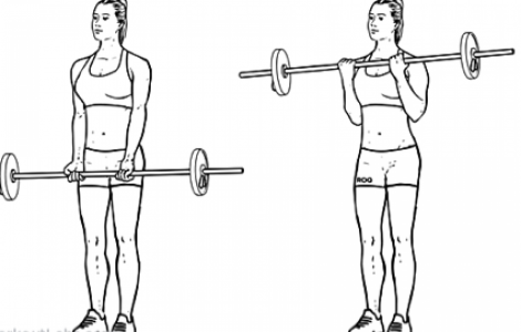 The Humble Biceps Curl